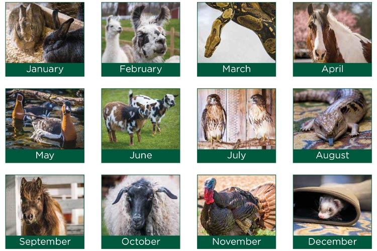 This image displays 12 photos of animals, illustrating which animals are listed for each month of 2022.
